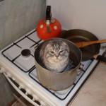 А потом... суп с котом. Моисеев Н.